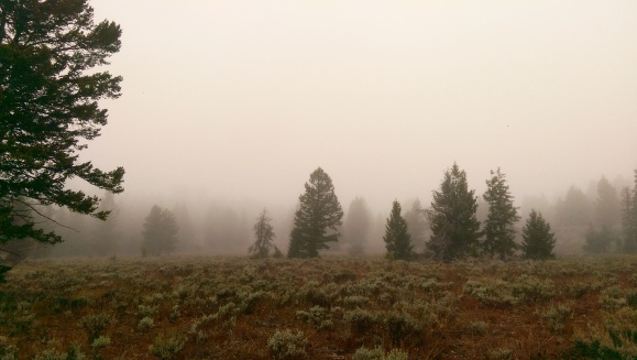 Landscape - Fog - Foggy - Cloud Cover - Woods - Forest - Wyoming - Grand Teton National Park